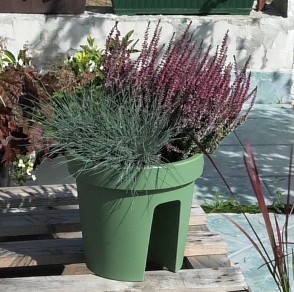 vrijesak-festuca-trava-jesenska-kombinacija-domnakvadrat-vrtni-centar-sestine