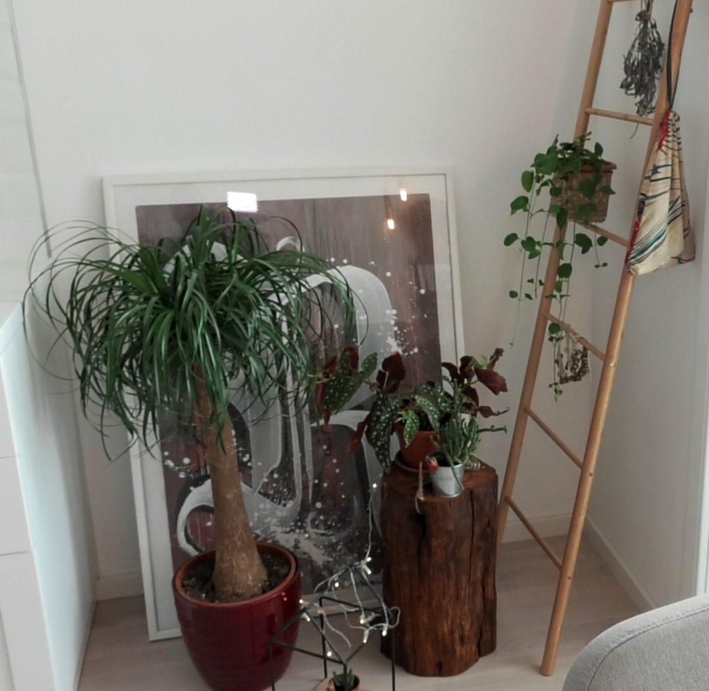 zeleni-kutak-mirela-priselac-remi-jysk-domnakvadrat