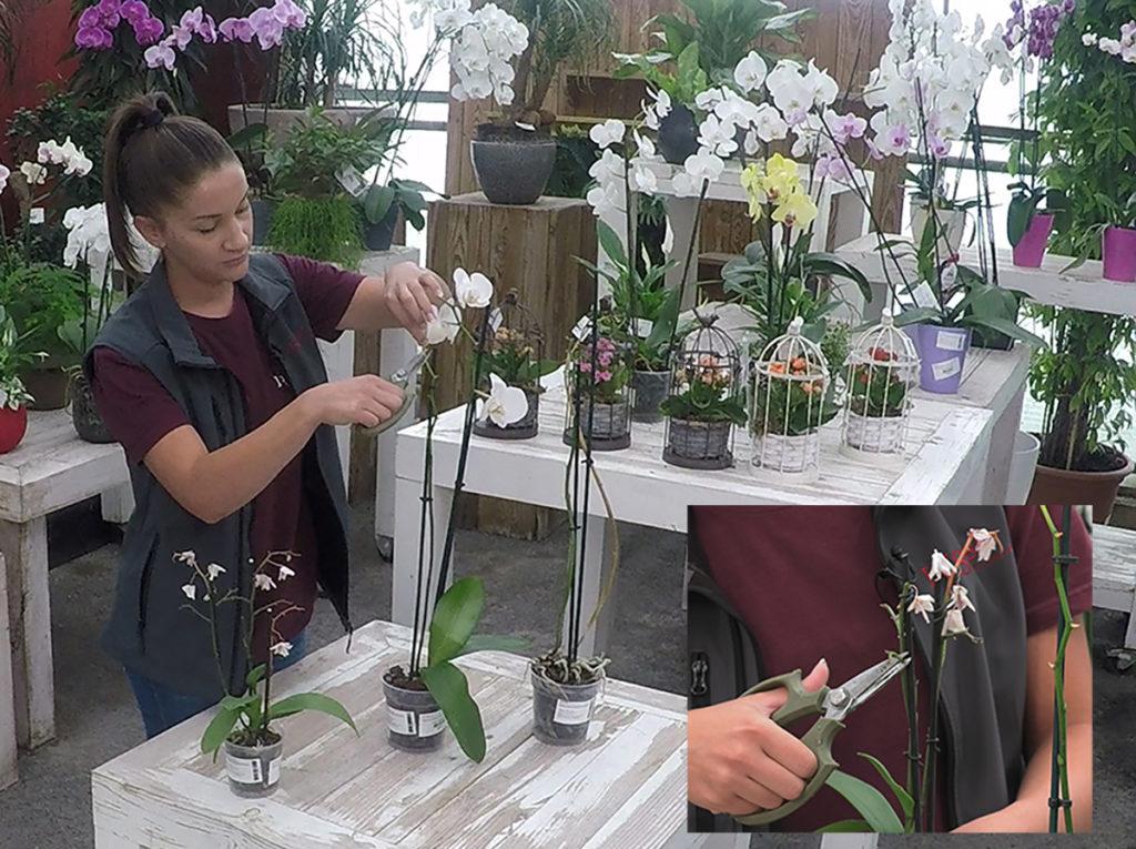 kako-da-orhideje-ponovno-cvatu-domnakvadrat