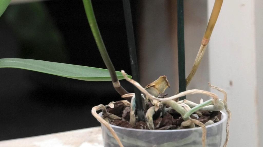 orhideja-bez-lista-domnakvadrat