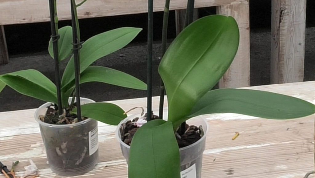 orhideje-koje-se-mogu-spasiti-domnakvadrat