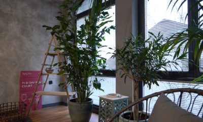biljke-za-tamne-prostore-caryota-mitis-riblji-rep-iris-mbm-vrtni-centar-domnakvadrat