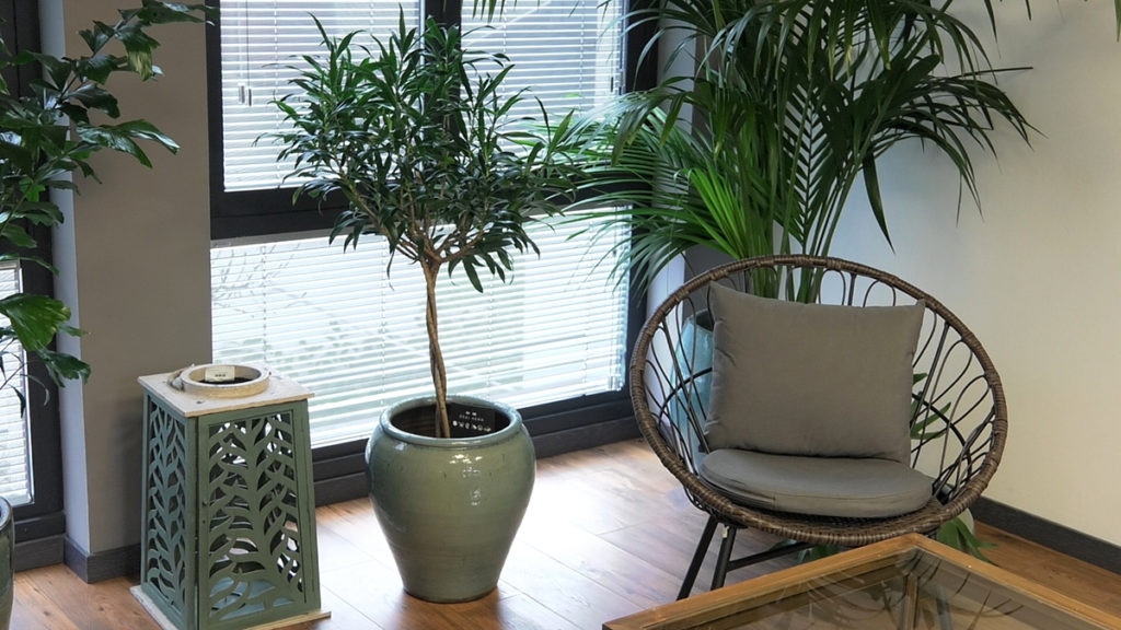 biljke-za-tamne-prostore-iris-mbm-vrtni-centar-domnakvadrat