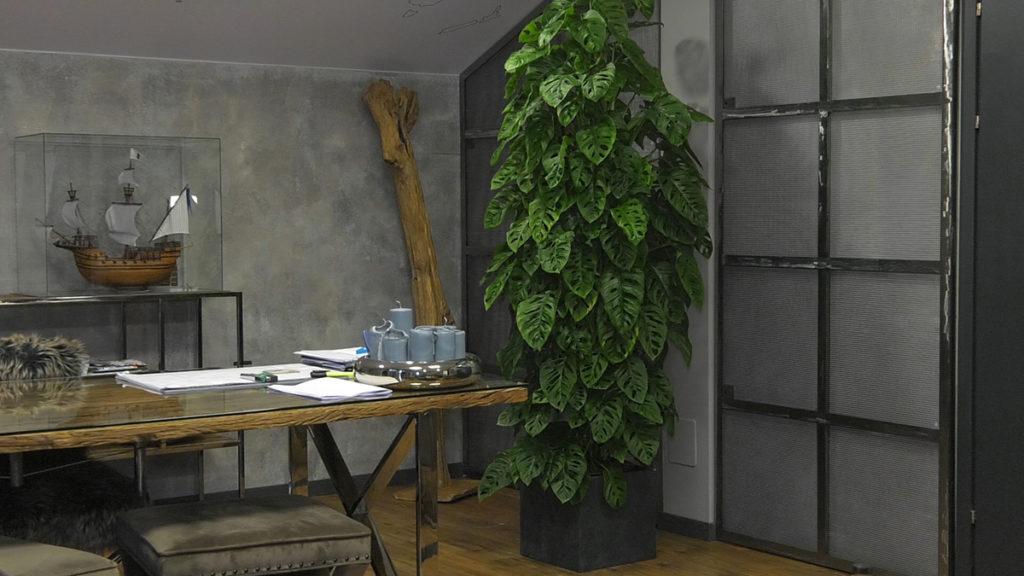 biljke-za-tamne-prostore-monstera-adansonii-iris-mbm-vrtni-centar-domnakvadrat