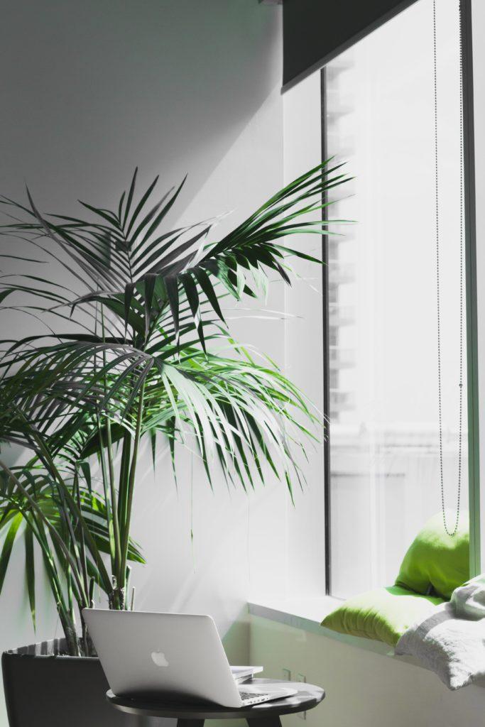biljka-u-uredu-blog-snježana-turajlija