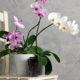 orhideje-na-stolcu-domnakvadrat