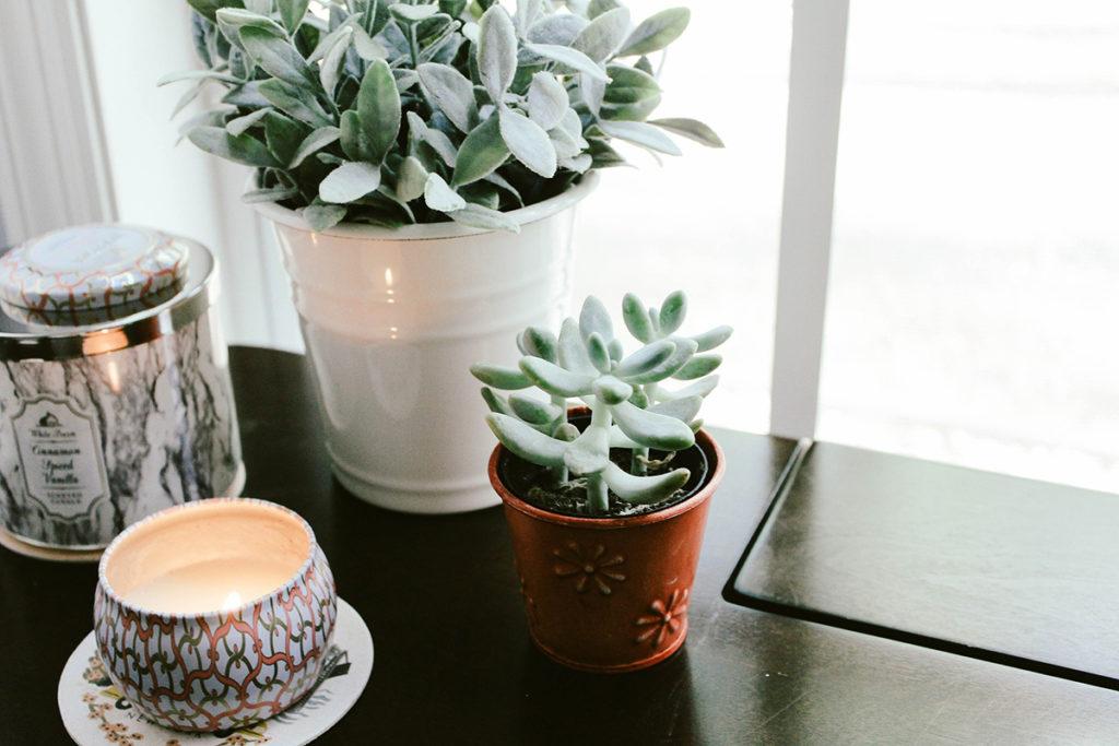 biljke-u-uredu-blog-snježana-turajlija