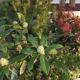 biljke-u-tegli-ulaz-u-dom-iris-mbm-vrtni-centar-domnakvadrat