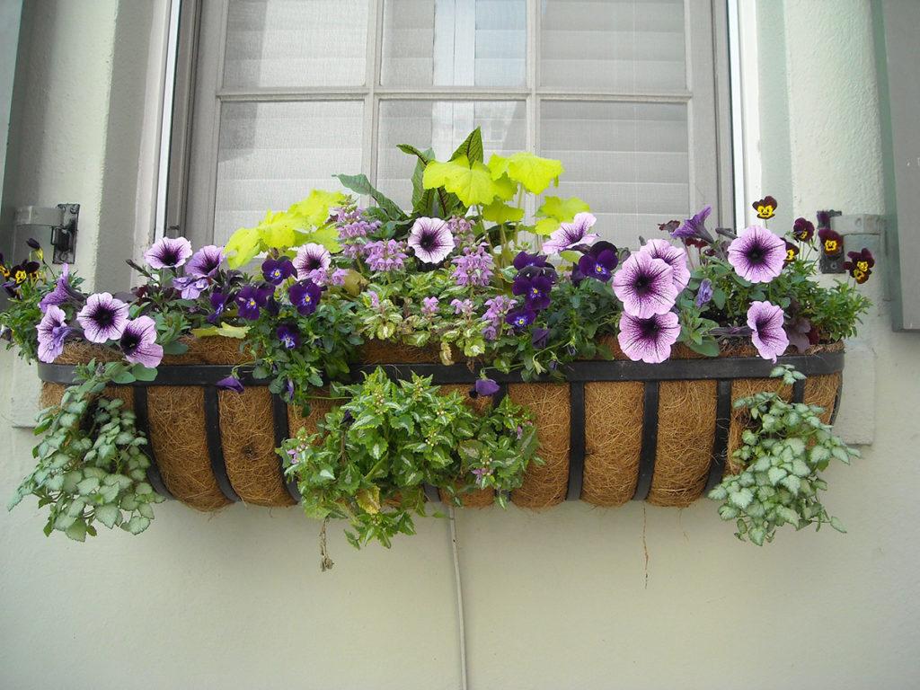 biljke-za-balkon-blog-snježana-turajlija