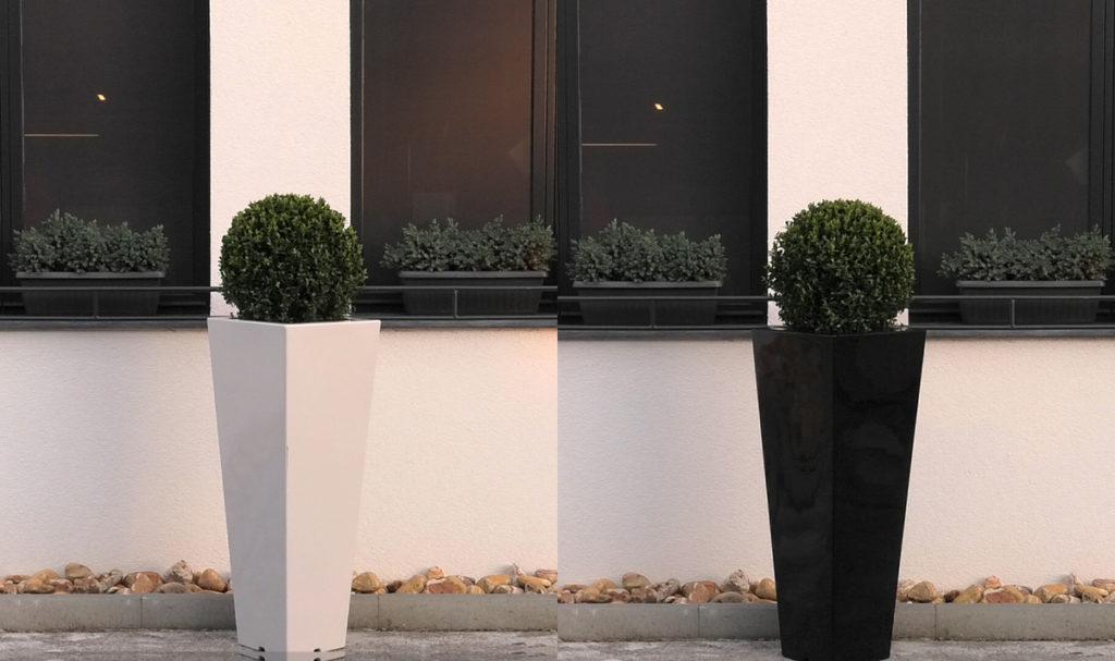 buksuzi-u-crnoj-i-bijeloj-tegli-iris-mbm-vrtni-centar-domnakvadrat