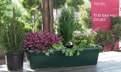 idealne-cvjetne-kombinacije-za-balkone-iris-mbm-vrtni-centar-domnakvadrat