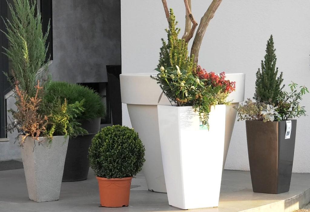 kombinacija-biljaka-za-ulaz-u-dom-iris-mbm-vrtni-centar-domnakvadrat