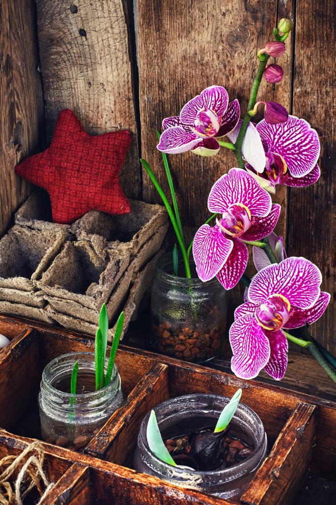 presadivanje-orhideja-u-proljece-domnakvadrat