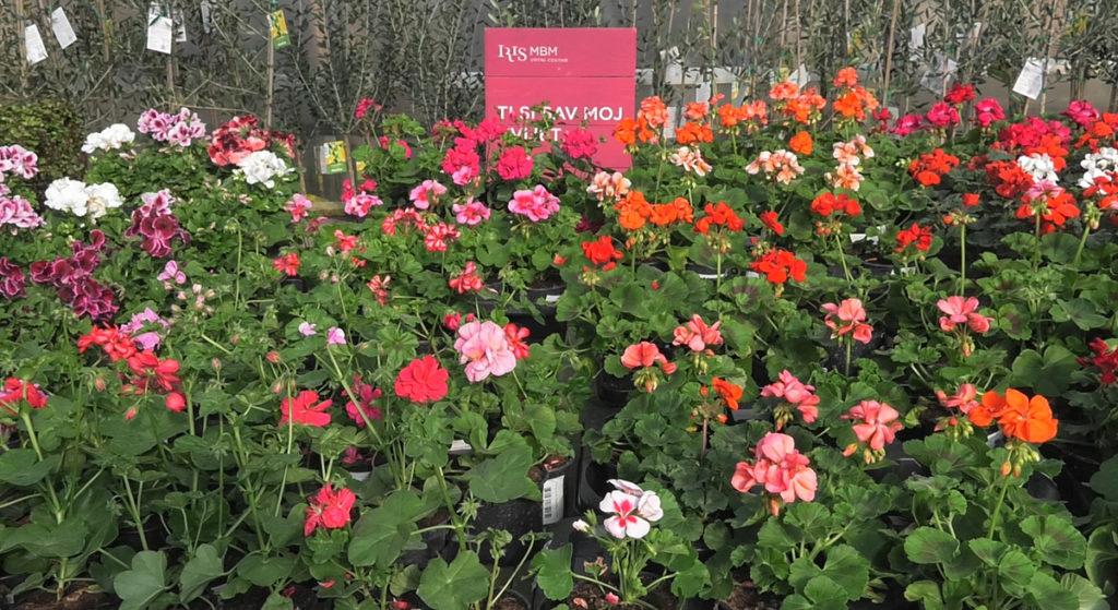 ponuda-ljetnica-idealne-cvjetne-kombinacije-za-balkone-iris-mbm-vrtni-centar-domnakvadrat