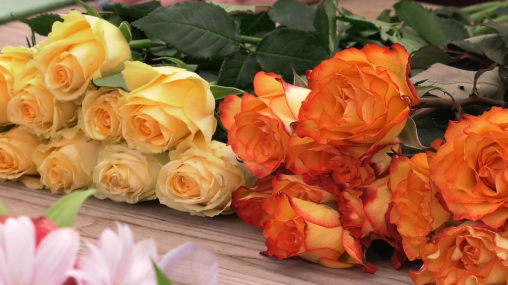 ruže-rezano-cvijeće-domnakvadrat