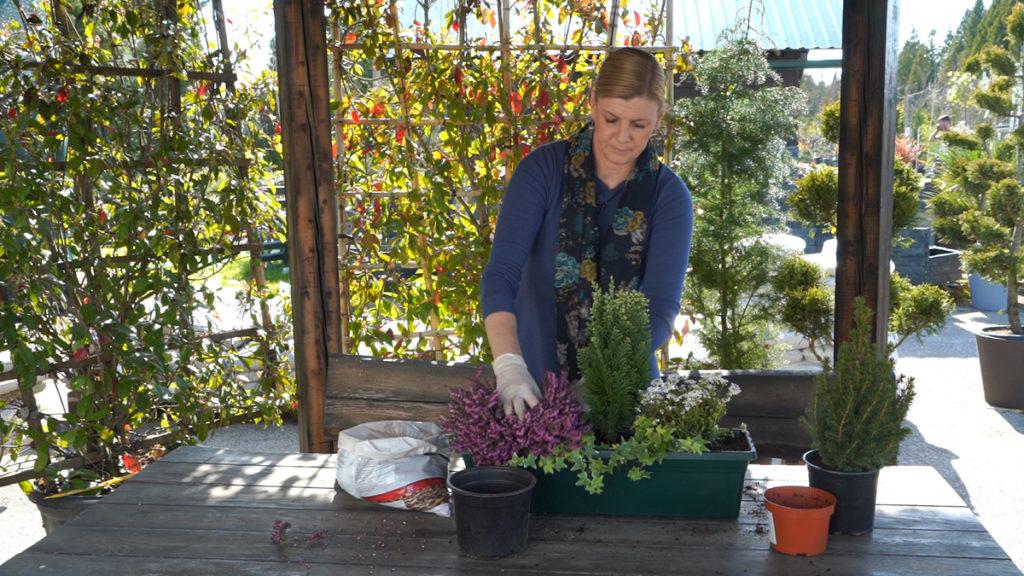 sadnja-idealne-cvjetne-kombinacije-za-balkone-iris-mbm-vrtni-centar-domnakvadrat