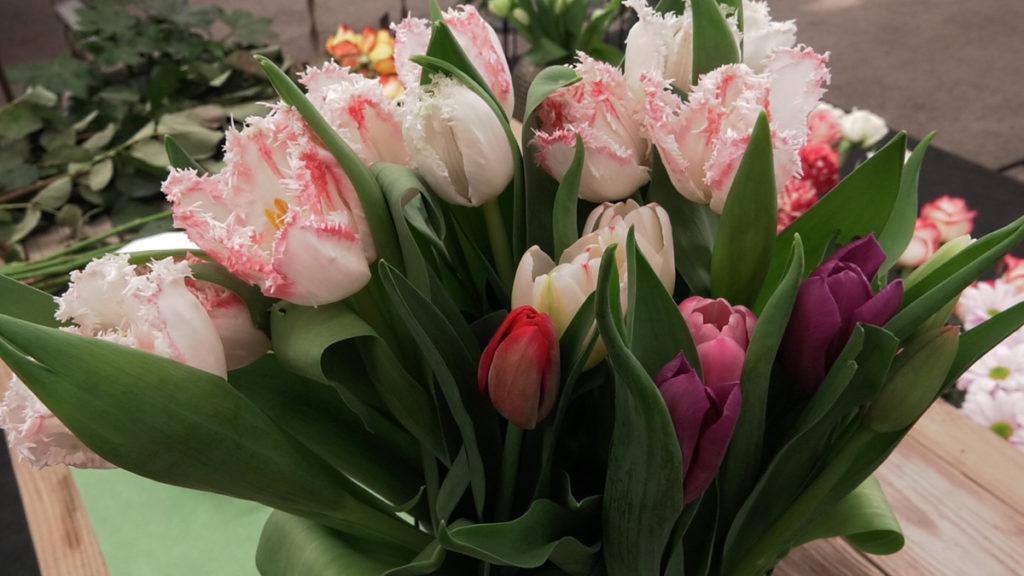tulipani-u-vazi-domnakvadrat