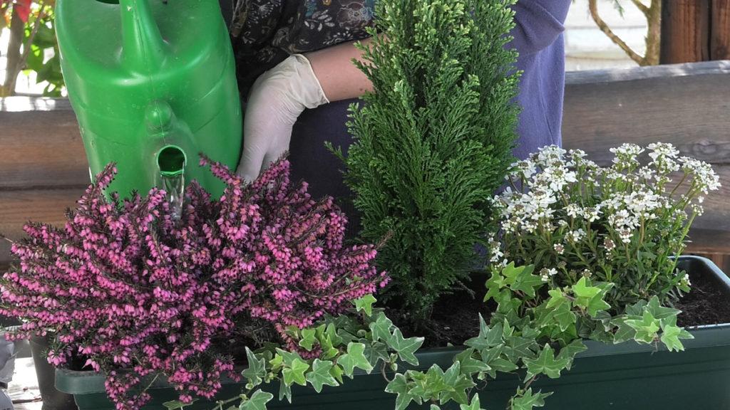 zalijevanje-idealne-cvjetne-kombinacije-za-balkone-iris-mbm-vrtni-centar-domnakvadrat
