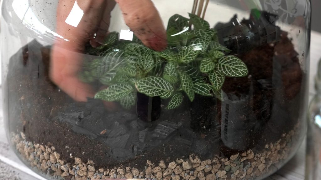 druge-biljke-terarij-iris-mbm-vrtni-centar-domnakvadrat