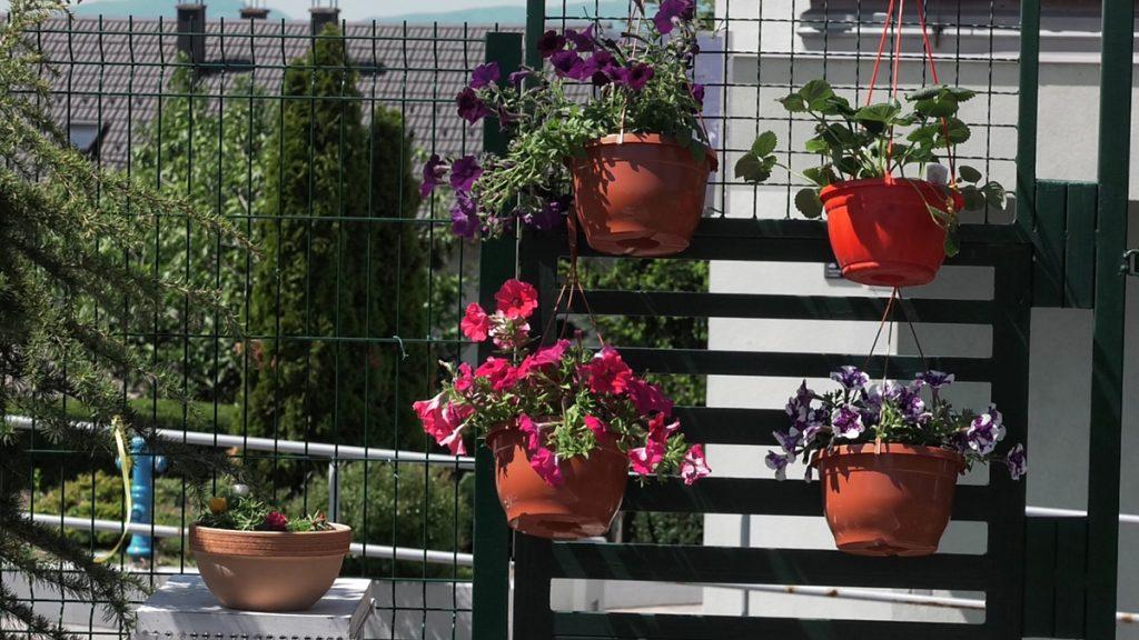 balkon-ljetnice-vrtni-centar-šestine-domnakvadrat