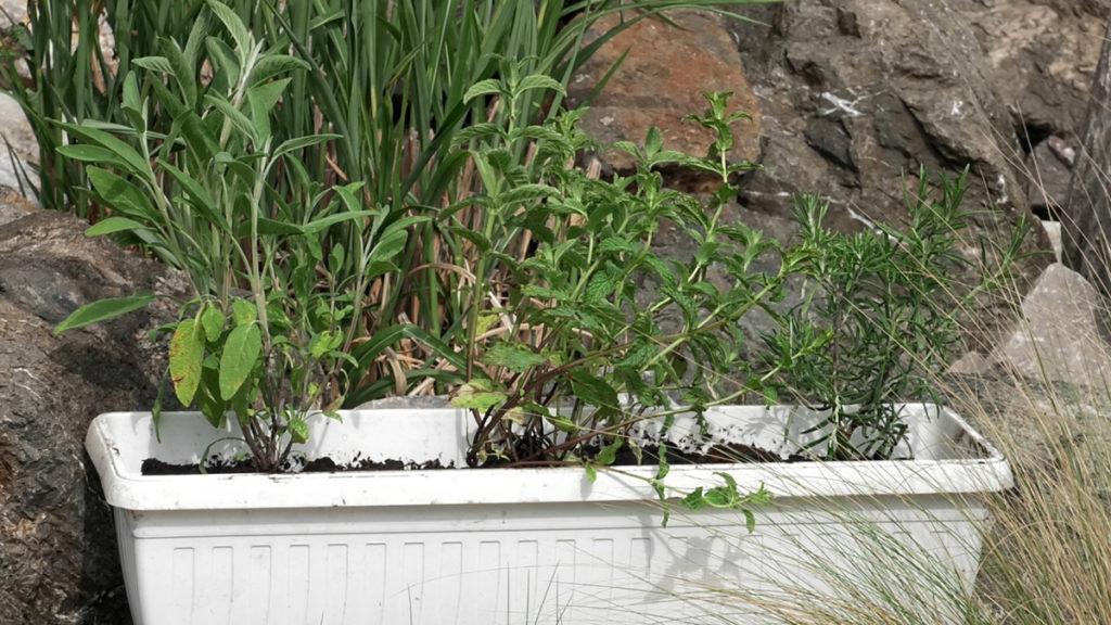 začinsko-bilje-jestivi-balkonski-vrt-vrtni-centar-šestine-domnakvadrat