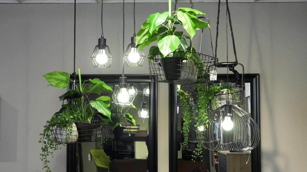 biljke-viseće-domnakvadrat