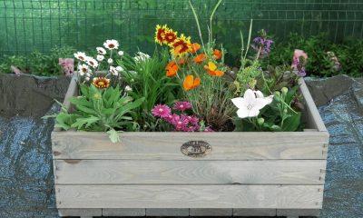 cvatuće-niske-trajnice-iris-mbm-vrtni-centar-domnakvadrat