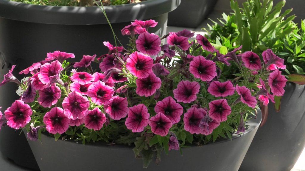 cvijeće-valerija-marić-domnakvadrat