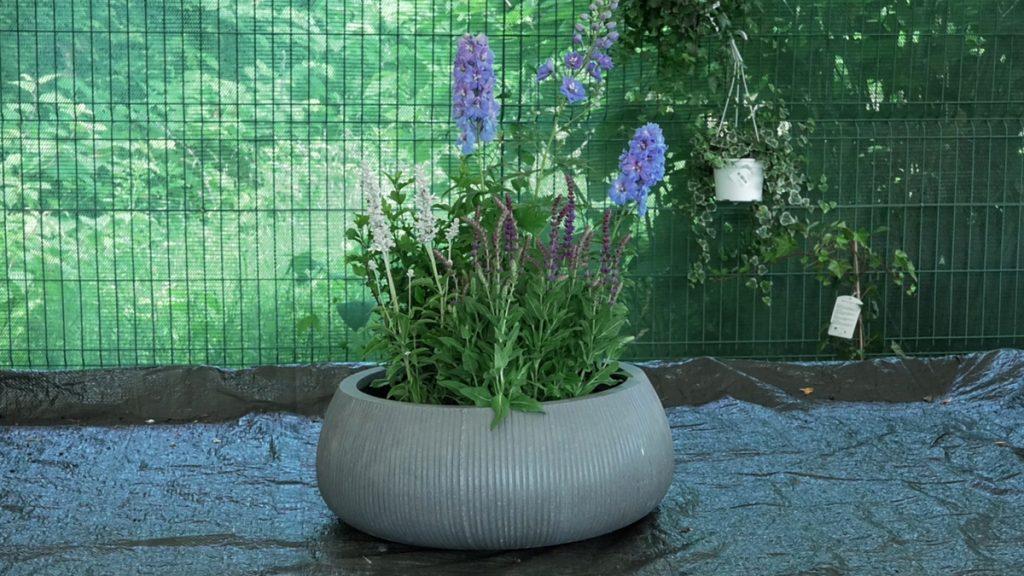 delfinium-iris-mbm-vrtni-centar-domnakvadrat