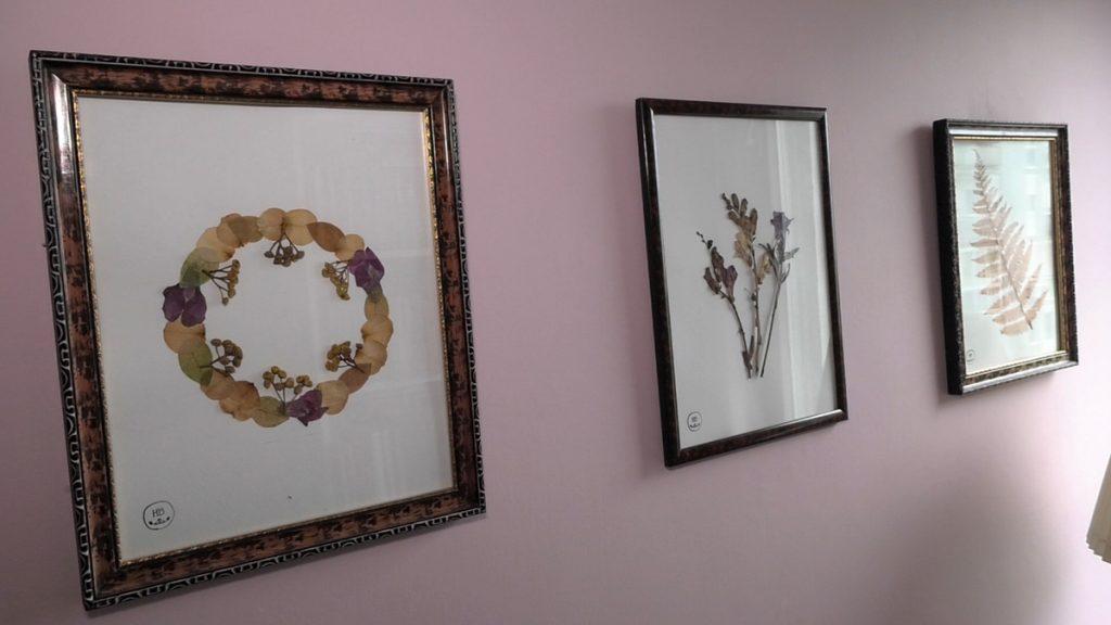 herbarij-slike-domnakvadrat