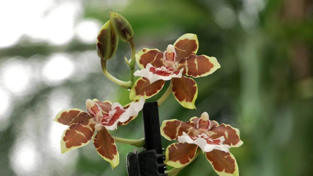 orhideja-cvijet-domnakvadrat
