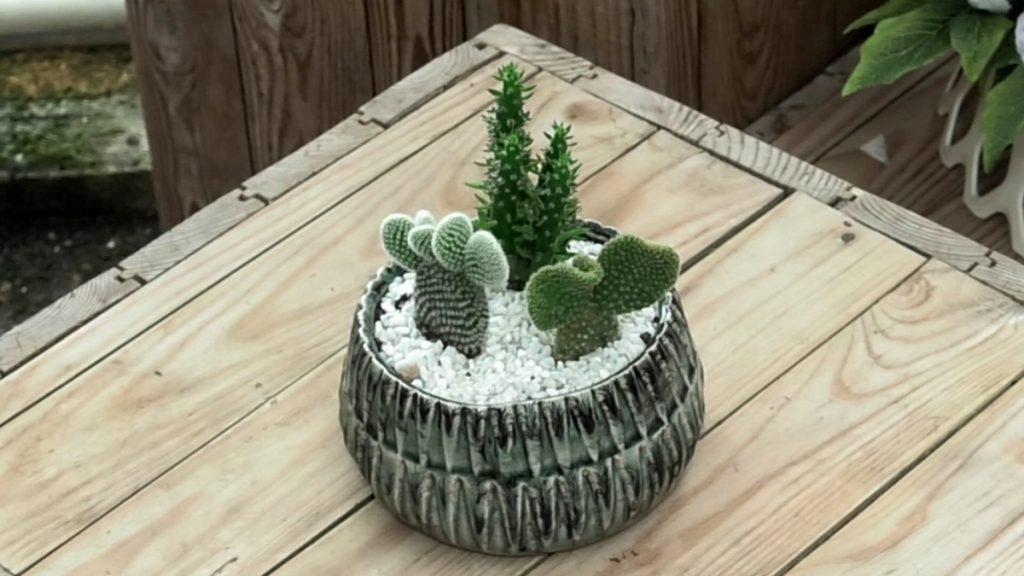 posađeni-kaktusi-iris-mbm-vrtni-centar-domnakvadrat