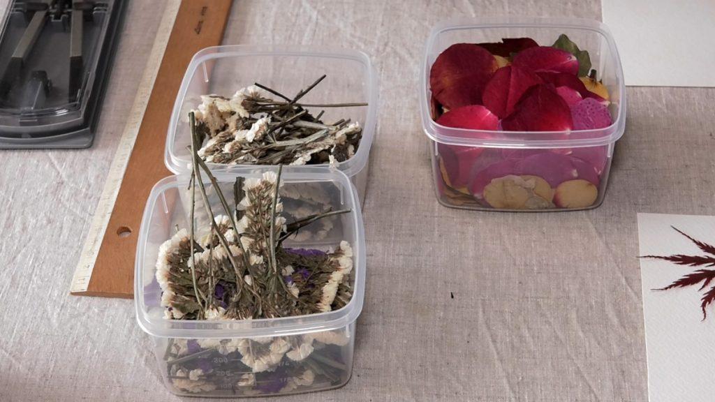 pribor-cvijece-herbarij-domnakvadrat