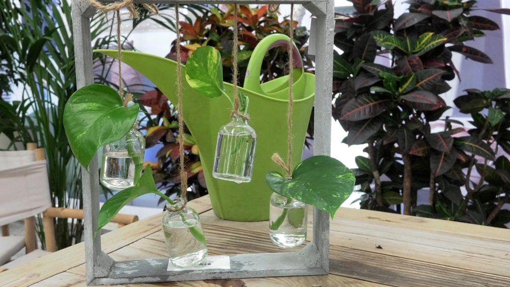 razmnožavanje-biljke-iris-mbm-domnakvadrat