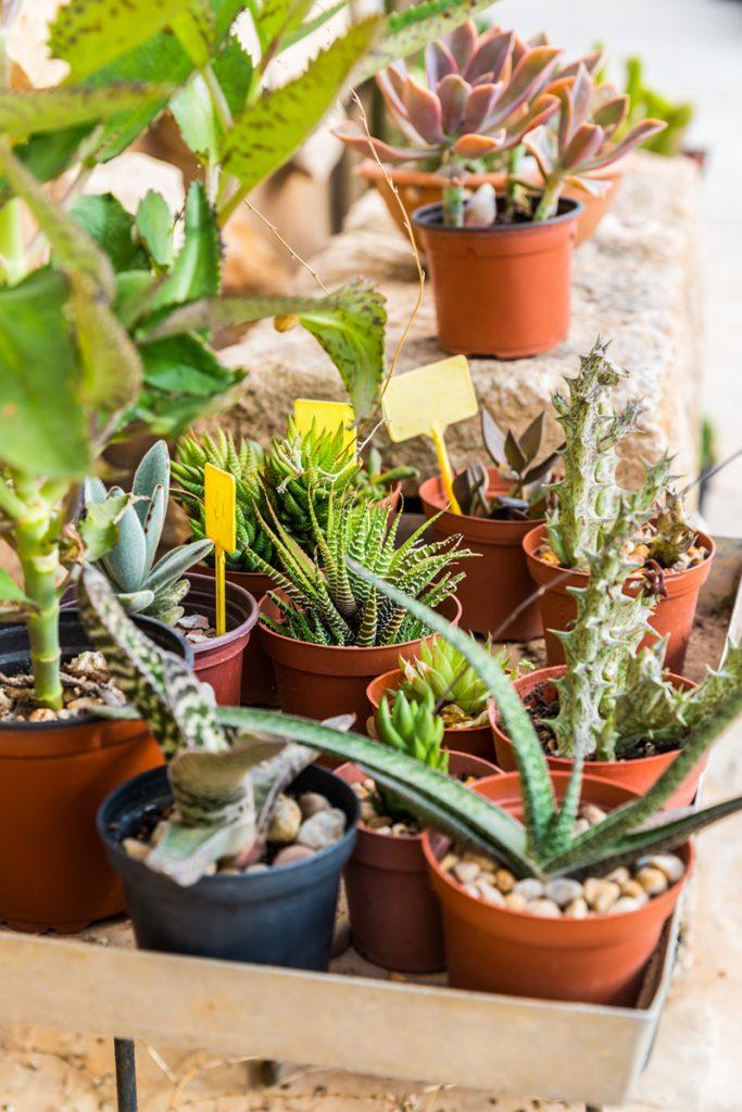 kaktusi-sukulenti-domnakvadrat