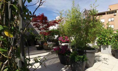 vrt-na-terasi-valerija-marić-domnakvadrat