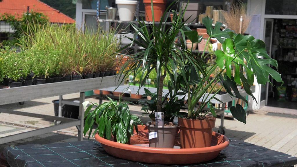 uronjene-biljke-vrtni-centar-šestine-domnakvadrat