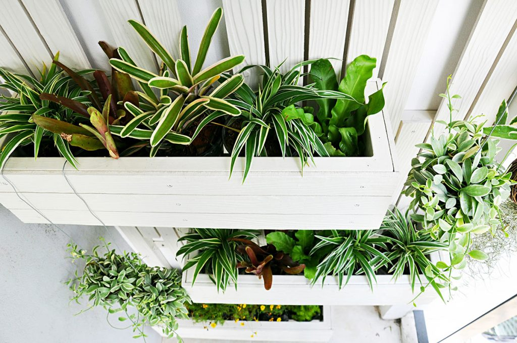 biljke-u-drvenim-kutijama-domnakvadrat