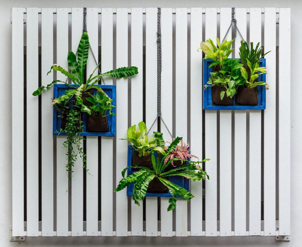 biljke-u-okvirima-domnakvadrat
