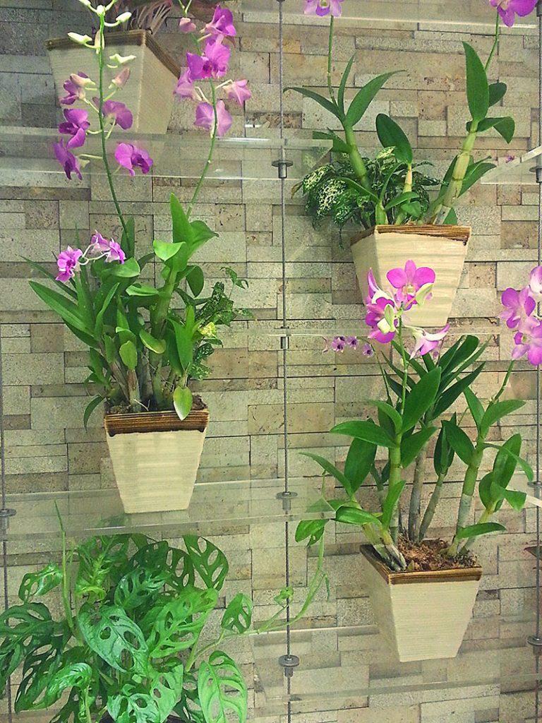 orhideje-viseće-tegle-domnakvadrat