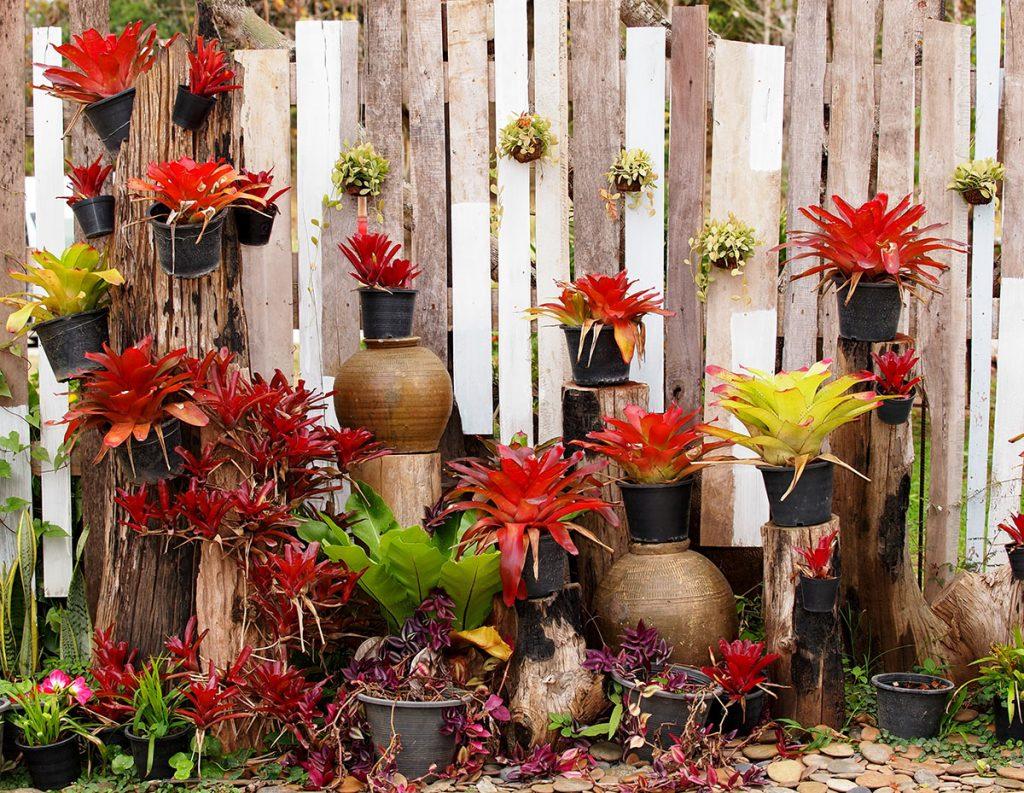 biljke-vrt-ograda-domnakvadrat