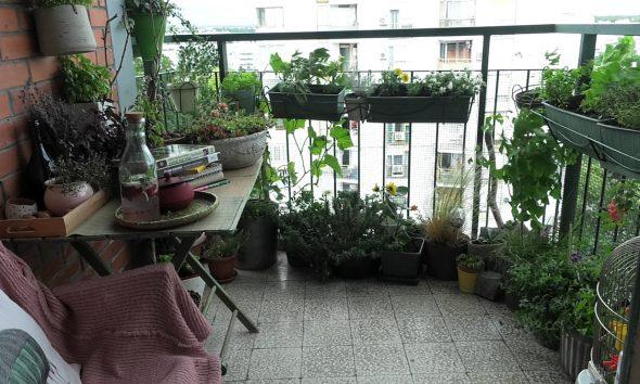 cvijeće-bilje-tegle-mini-balkon-domnakvadrat