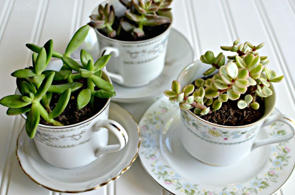 šalice-tegle-cvijeće-sukulenti-domnakvadrat