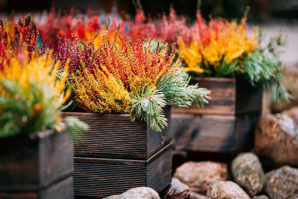 žardinjere-cvijeće-jesen-domnakvadrat