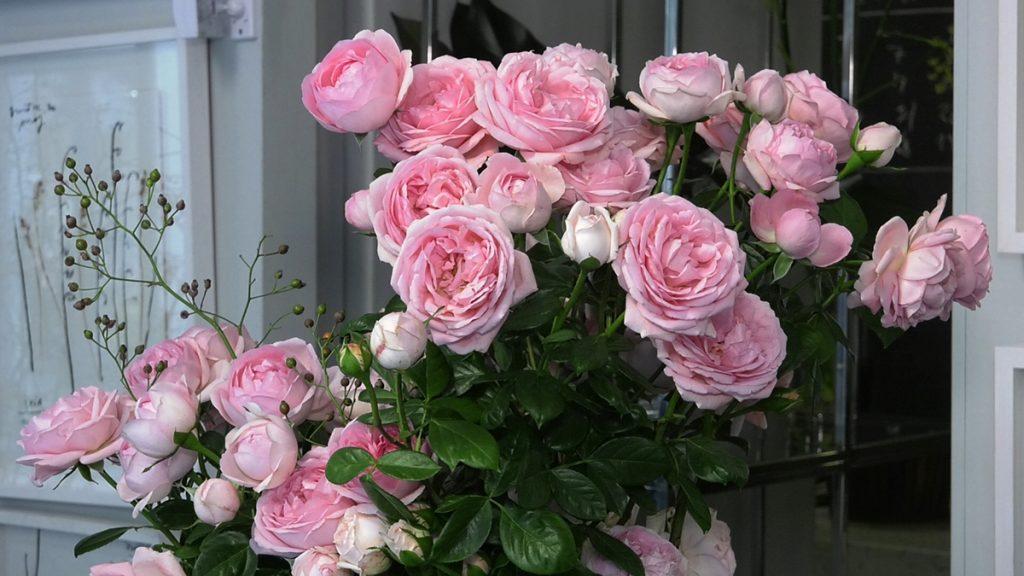 viktorijanske-ruže-jesenski-aranžman-saša-šekoranja-domnakvadrat