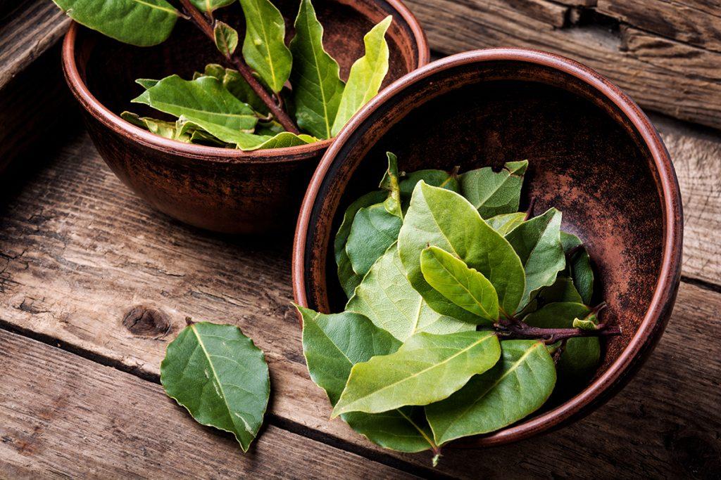 lovor-biljka-domnakvadrat