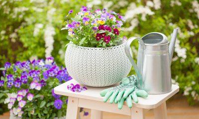 tegla-cvijeće-maćuhica-zalijevača-domnakvadrat