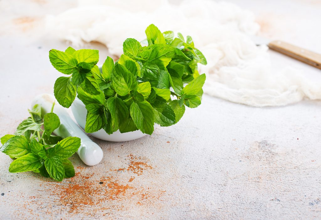 metvica-biljka-domnakvadrat