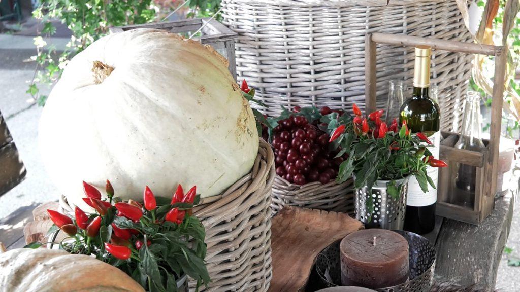 jesenski-plodovi-iris-mbm-domnakvadrat