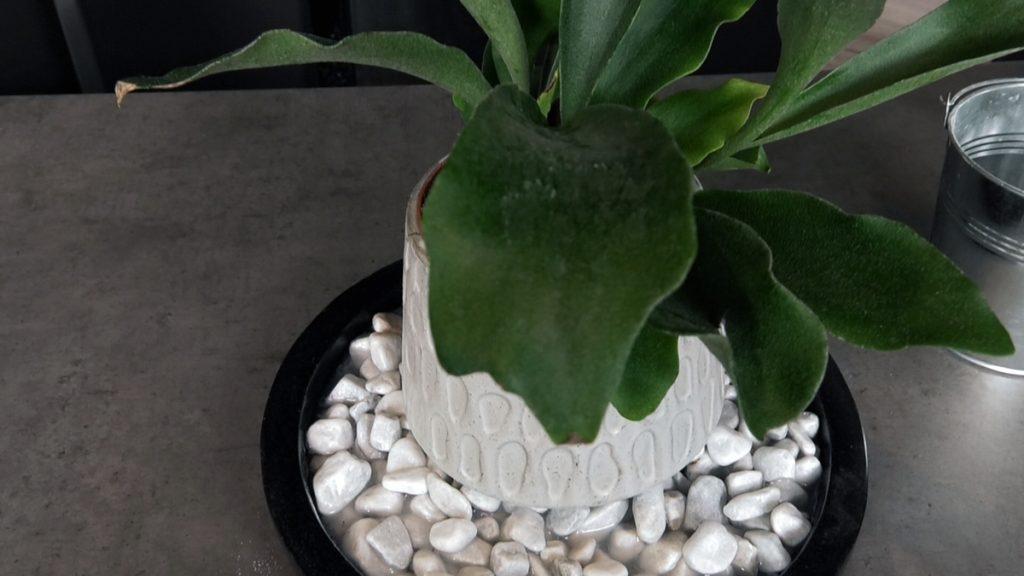 biljka-na-šljunku-iris-mbm-domnakvadrat